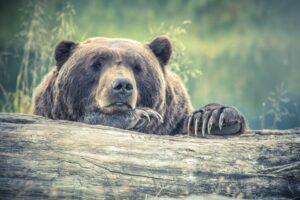 Șeful Gărzii de Mediu: Nu contează dimensiunea ursului, nici cine l-a împușcat, ci cum s-a făcut recoltarea
