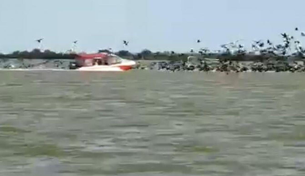 Dezastru ecologic în Delta Dunării. Bărcile de viteză distrug fauna