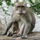 Monkey B