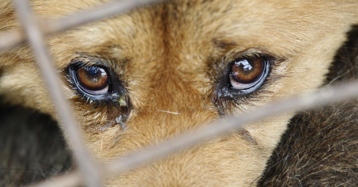 Imaginile care au șocat România. Un biet câine a fost târât prin oraș de șoferul unui UTILAJ!