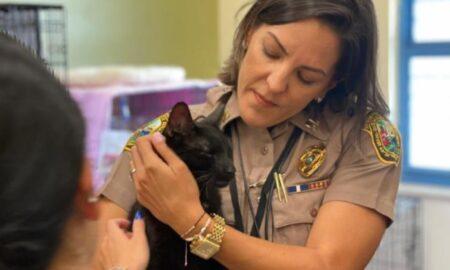 La 16 zile de la prăbușirea imobilului din Florida, printre dărâmături, o pisică a fost găsită în viață