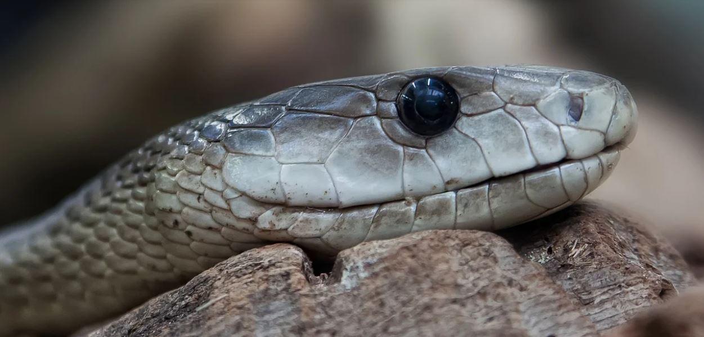 Atenție la vipere! Valul de căldură scoate acești șerpi veninoși din vizuinile lor
