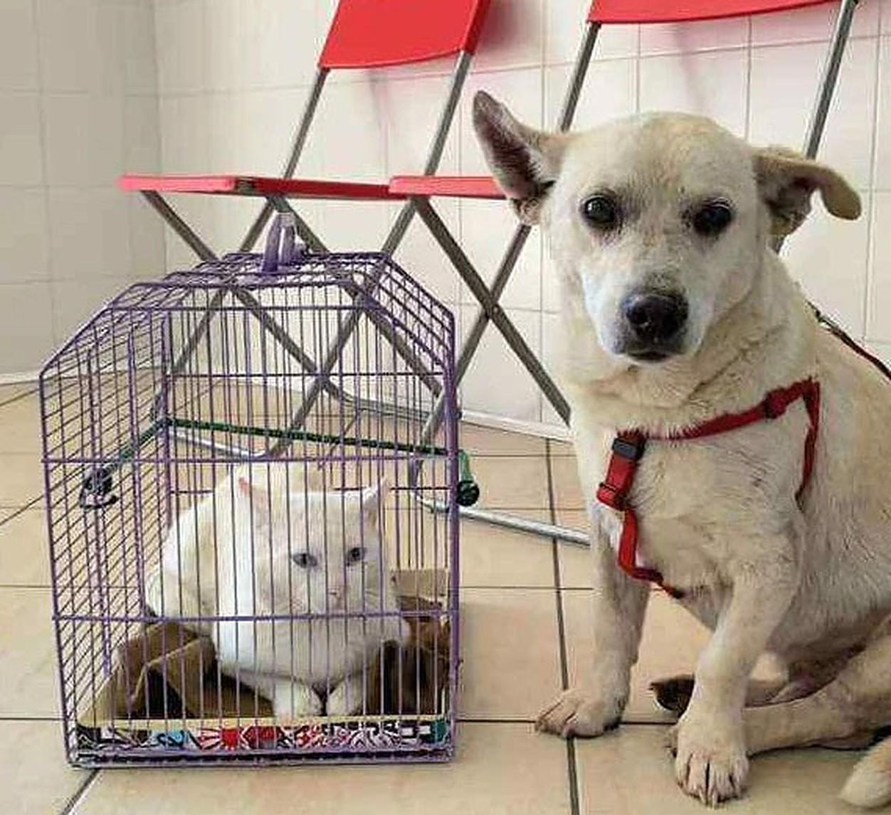 Abandonați împreună într-un parc, un cățel și o pisică au devenit cei mai buni prieteni!