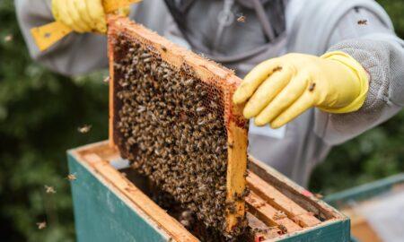 Apicultorii au nevoie de susținere! Producția de miere este în pericol din cauza secetei