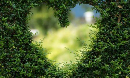 Natura te ajută să devi mai frumoasă. Uite cum poți slăbi la menopauză cu ajutorul plantelor