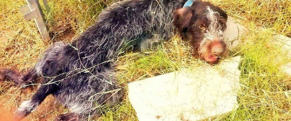 Un câine paralizat și abandonat a fost abandonat fără milă pe un drum!