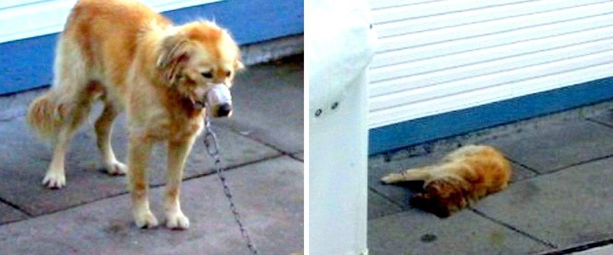 Un cățel a fost victima unor abuzuri repetate, până când vecinii decid să intervină!