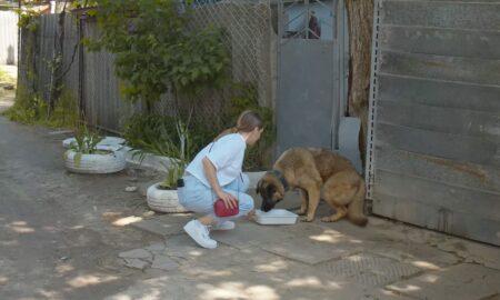 Abandonat în fața porții, un câine are parte de surpriza vieții lui!