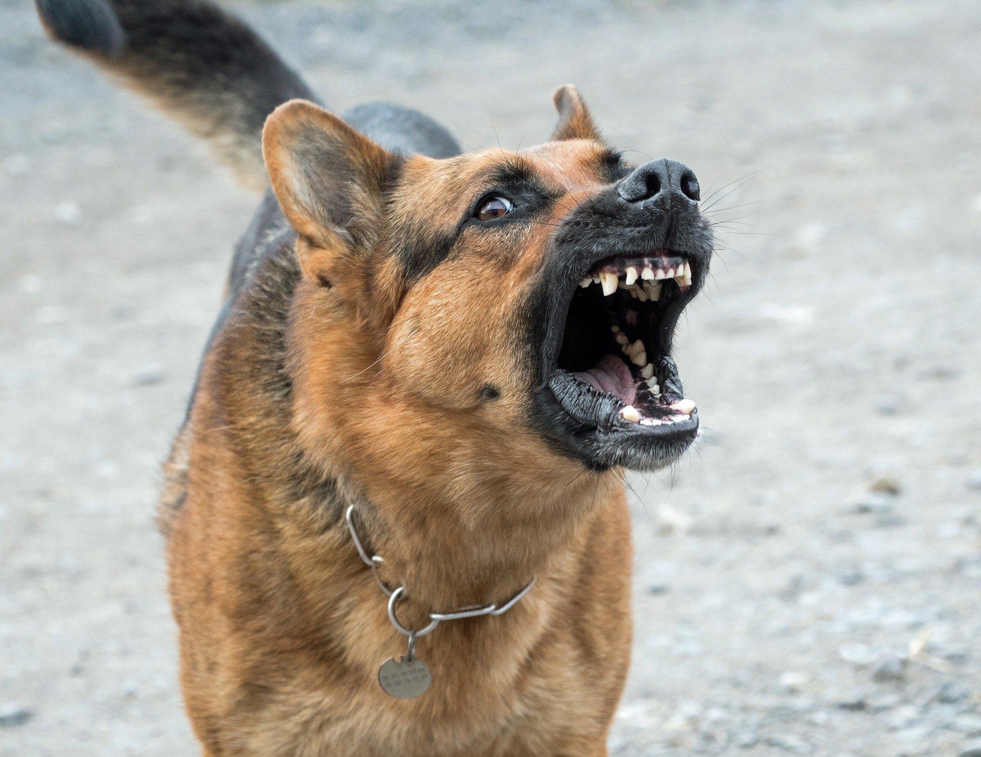 Amendă de 7.500 de lei luată de un bărbat din Brăila, după ce câinii săi au omorât un alt patruped!