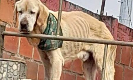Blocat pe acoperișul unei case, un câine deprimat era la un pas să moară de foame!