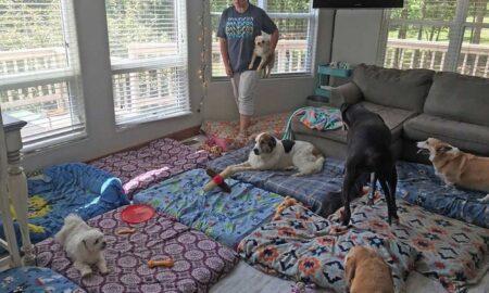 Câinii bătrâni, lupta unui bărbat pentru a ajuta cât mai multe animale de companie!