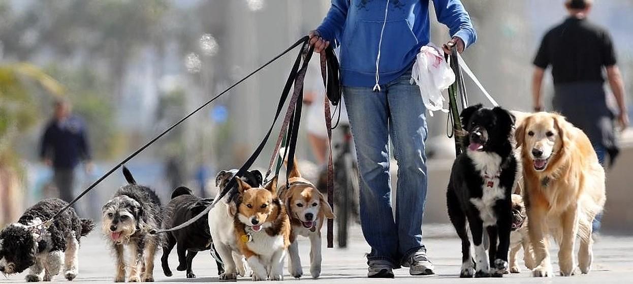 Creștere alarmantă a furtului animalelor de companie! Peste 2.000 de câini au fost furați în anul 2020