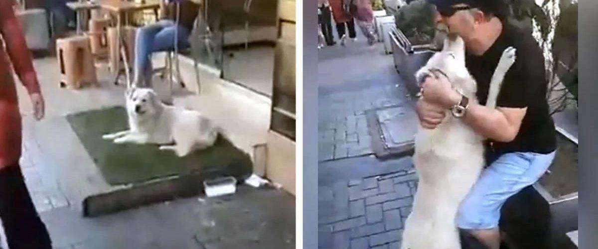 Dispărut de luni întregi, un cățel care trăia pe stradă s-a reîntâlnit întâmplător cu familia sa!