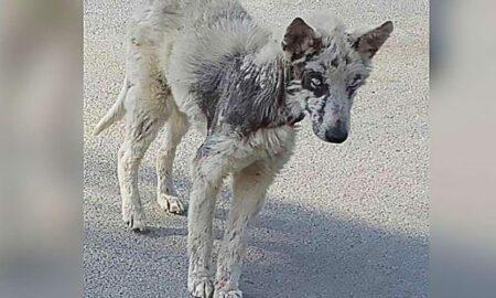 Dragostea oferită de familie, salvarea unui cățel subnutrit și abandonat pe străzi!