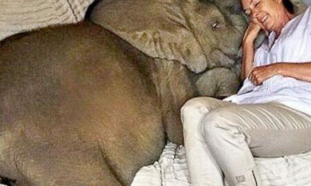 După ce a salvat un pui de elefant abandonat, o femeie are parte de un prieten cu totul special!