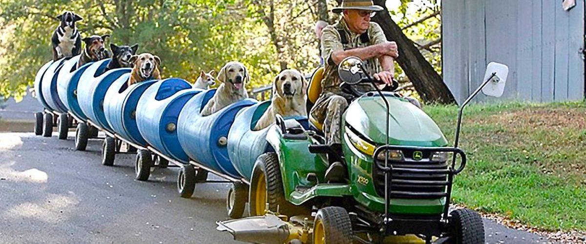Gest impresionant pentru câinii de pe străzi! Cum a decis un bătrân să ajute animalele de companie defavorizate