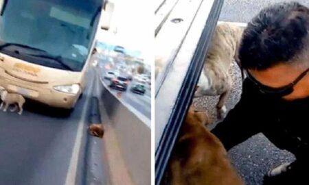 Gestul impresionant al unor polițiști pentru doi câini ajunși pe o autostradă aglomerată!