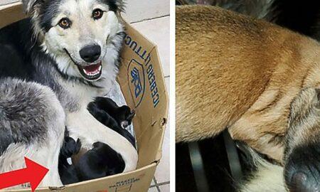 Închisă împreună cu puii săi într-o cutie de carton, o cățelușă este salvată în ultima clipă!