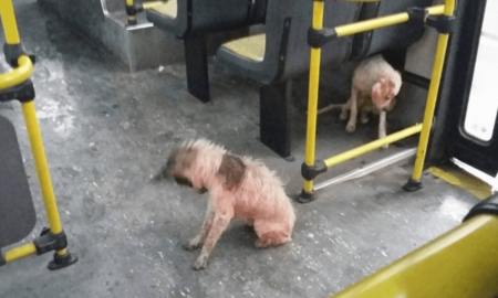 Nimic nu a putut opri un șofer atunci când a observat mai mulți câini afară, în timpul unei furtuni!