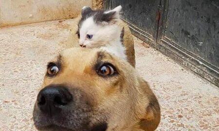O cățelușă fără stăpân a adoptat un pui de pisică orfan!
