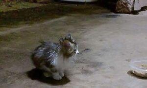 O pisicuță a fost adoptată într-un moment în care avea cea mai mare nevoie!