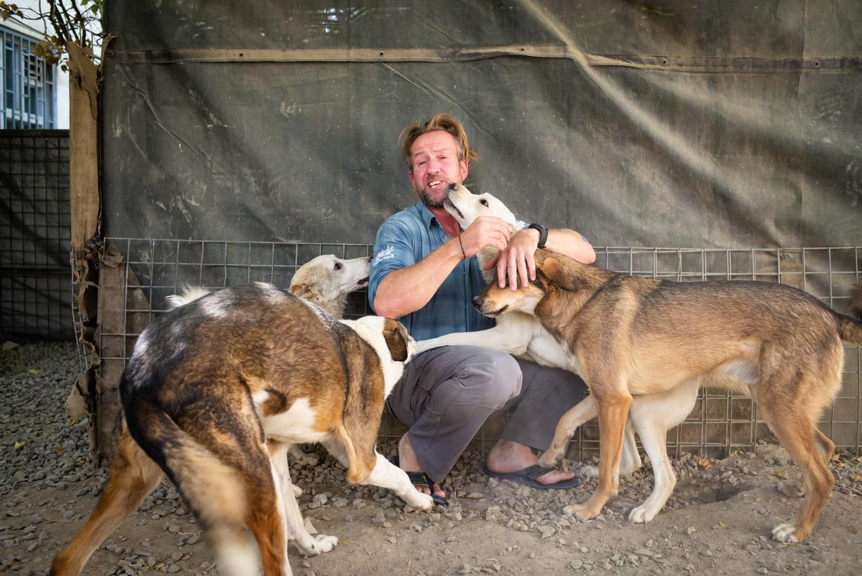 Peste 200 de câini și pisici salvați din Afganistan! Decizia unui fost militar din teatrul de operațiuni