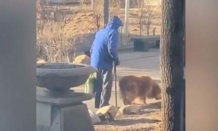 Plimbarea zilnică, obiceiul de o viață a unui bătrân împreună cu patrupedul său loial!