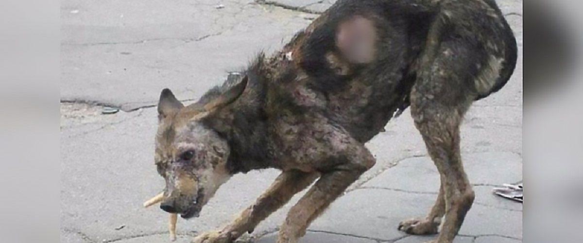 Sfătuiți să nu se apropie de câinele abandonat, un cuplu decide să îi schimbe complet viața!