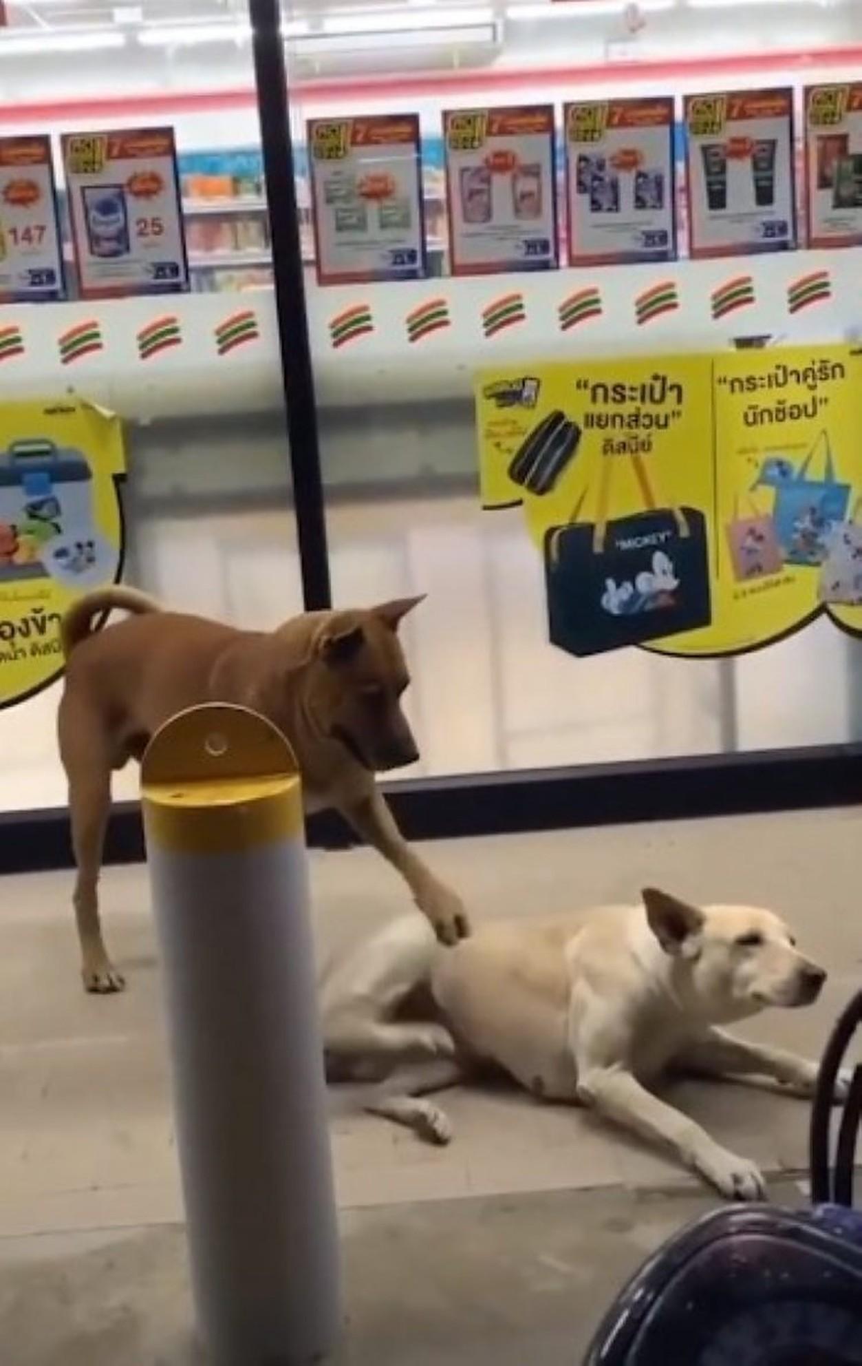 Un câine a fost surprins într-un moment cu totul neobișnuit! Cum își ajuta patrupedul pe cel mai bun prieten