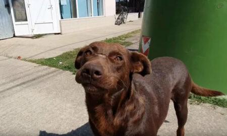Un câine fără adăpost și-a așteptat salvarea în fiecare zi, fără să își piardă speranța la o familie!