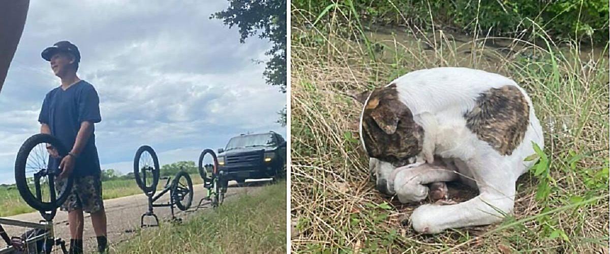 Un cățel lovit de mașină este salvat de un grup de copii!