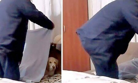 Un Labrador are parte de un tratament special de la stăpânul său, în fiecare seară!