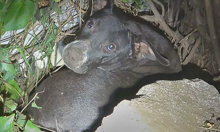 Afectată după ce i-a murit un pui și un altul a fost furat, o cățelușă speriată și-a pierdut încrederea complet în oameni!