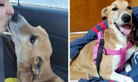 Bucuria resimțită de o cățelușă după ce a fost salvată de pe stradă!