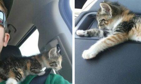 Chiar dacă este alergic la pisici, un șofer de camion nu poate rămâne indiferent la nevoile unui pui de pisică abandonat!