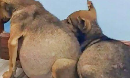 Doi căței au fost salvați în ultima clipă! Ei aveau nevoie urgentă de un tratament din partea medicului veterinar