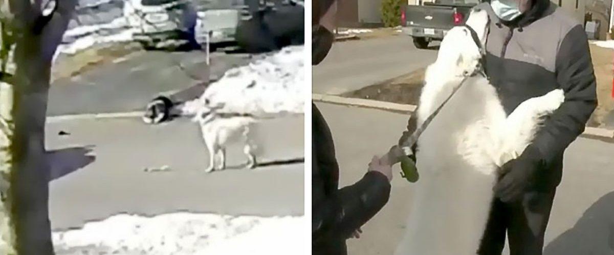 Gestul salvator al unui cățel pentru stăpâna lui căzută pe trotuar!