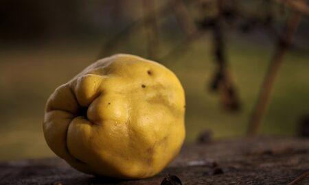 Ce se întâmplă dacă mănânci gutui în fiecare zi. Proprietăți sănătoase pentru sistemul digestiv