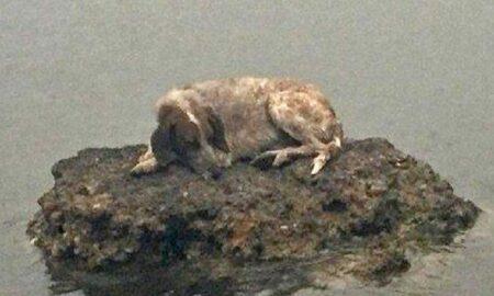 La un pas să își piardă viața din cauza unui incendiu, o cățelușă s-a refugiat pe o stâncă în largul mării!