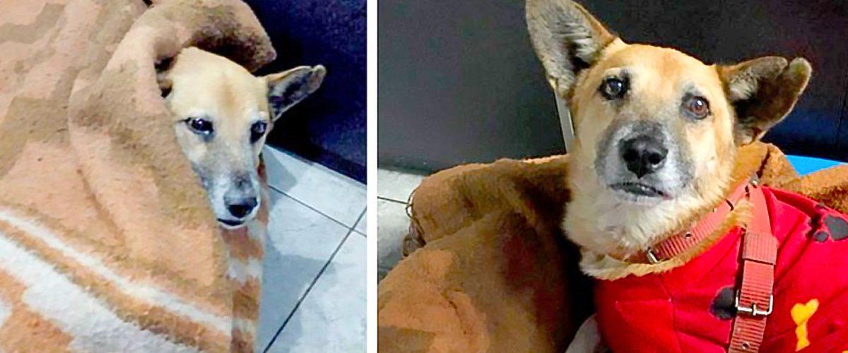 O așteptare de șase luni la aeroport a unui cățel după familia sa!