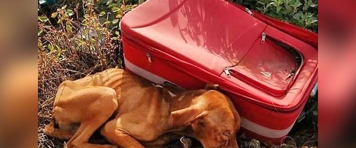 O valiză roșie a devenit casa unui biet cățel abandonat în pustietate!