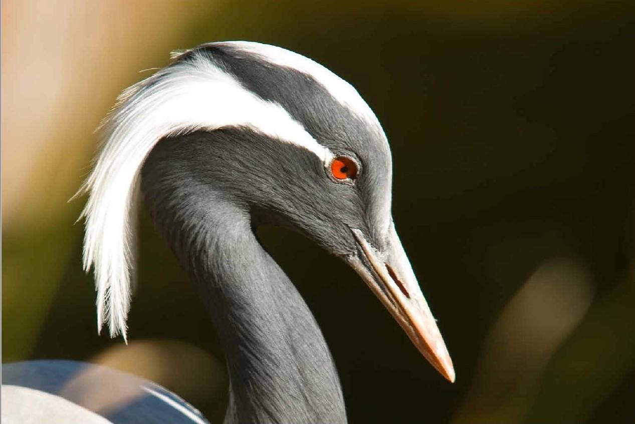 Studiu BirdLife International. Concluzii extrem de îngrijorătoare privind păsările din Europa