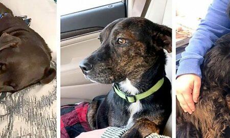 Plecată să adopte un singur cățel, o femeie se întoarce acasă cu trei animale de companie!