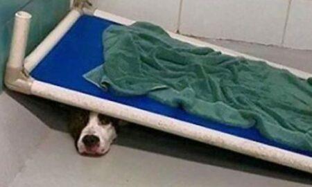 Un cățel a fost surprins în momentul în care se ascundea sub patul din adăpost!